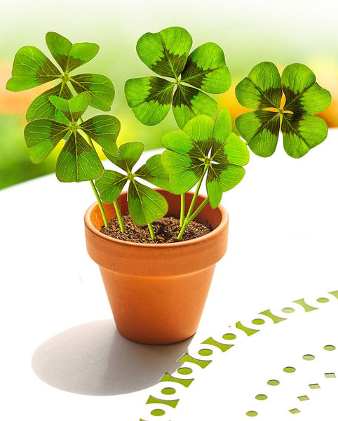 The four-leaf clover, the symbol of luck