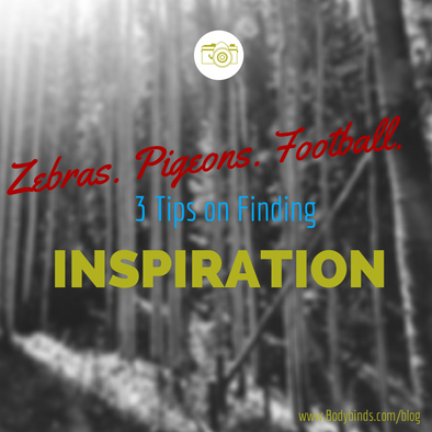 Zebras. Pigeons. Football. 3 Tips on Finding Inspiration