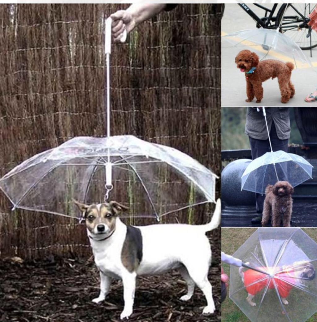 Doggie Umbrella