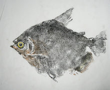 Load image into Gallery viewer, Gyotaku Fish Print 10 - Metinus (10 x 8.5 in.)