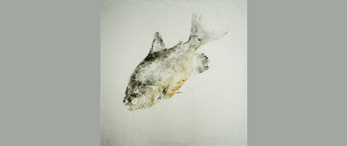 Gyotaku Fish Print 11 - Pacu (8.5 x 11 in.)