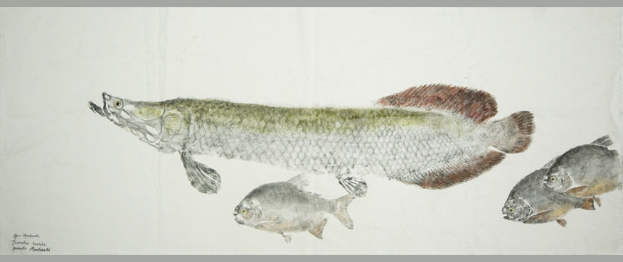 Gyotaku Fish Print 131 - Arapaima and Pacu (68 x 27 in.)