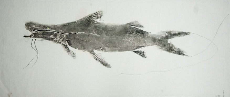 Gyotaku Fish Print 015 - Catfish (26 x 10 in.)