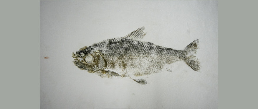 Gyotaku Fish Print 004 - Silver Side (17 x 8 in.)
