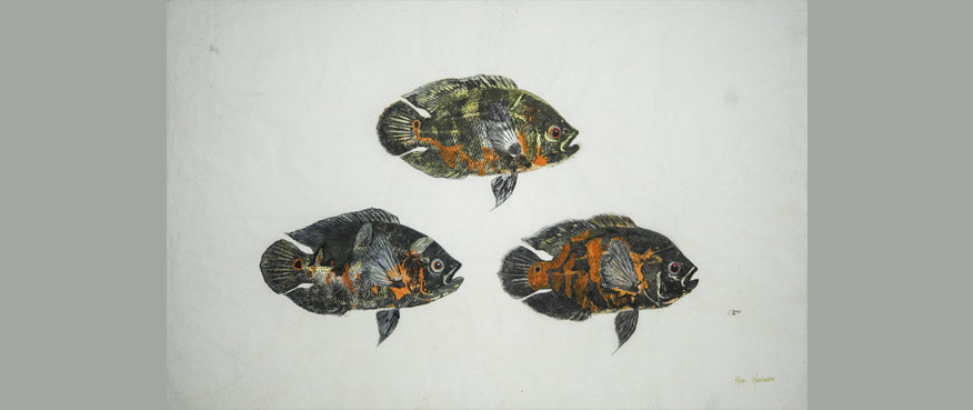 Gyotaku Fish Print 54 - Oscar (31 x 18.5 in.)
