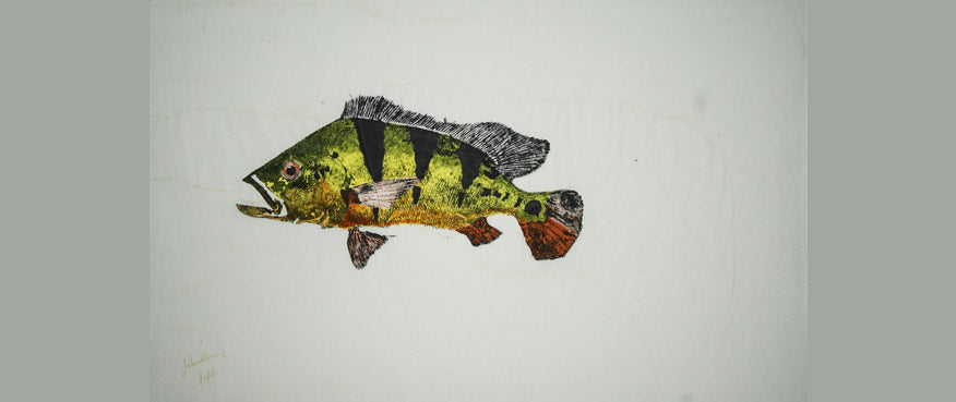 Gyotaku Fish Print 63 - Peacock Bass (24.5 x 14.5 in.)