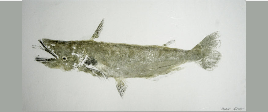 Gyotaku Fish Print 008 - Catfish (17.5 x 8.5 in.)
