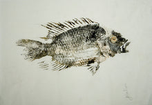 Load image into Gallery viewer, Gyotaku Fish Print 009 - Cichlid (12.5 x 9 in.)