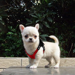 Soft Suede Leather Small Dog Harness