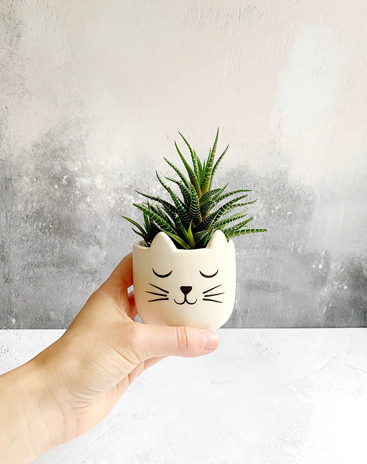 Cat Mini Plant Holder