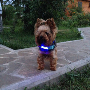 Light Night Safety LED Dog Collar - tagadgets