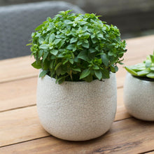Crackle Glaze Plant Pot