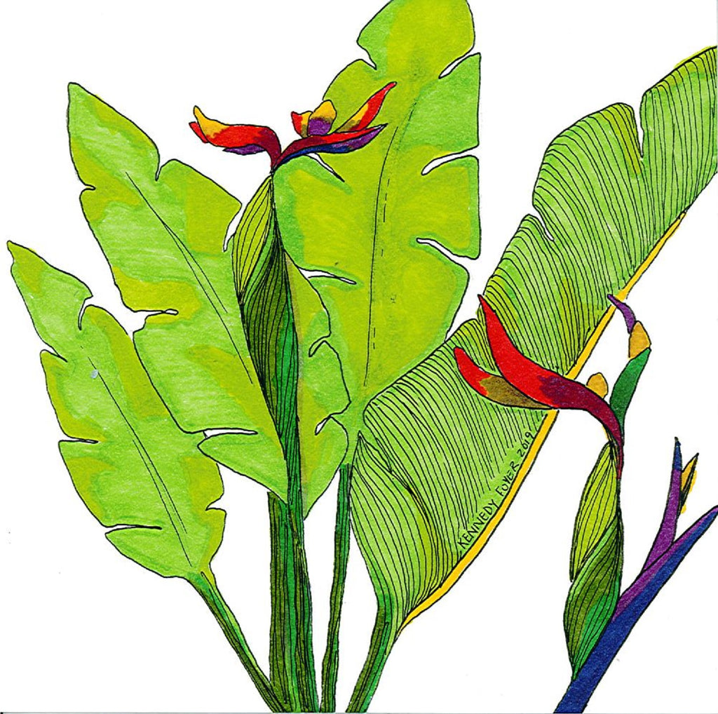 Giclee Print-Birds of paradise