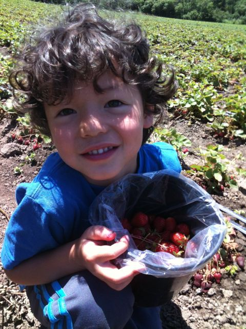 Pick Your Own Strawberries 2