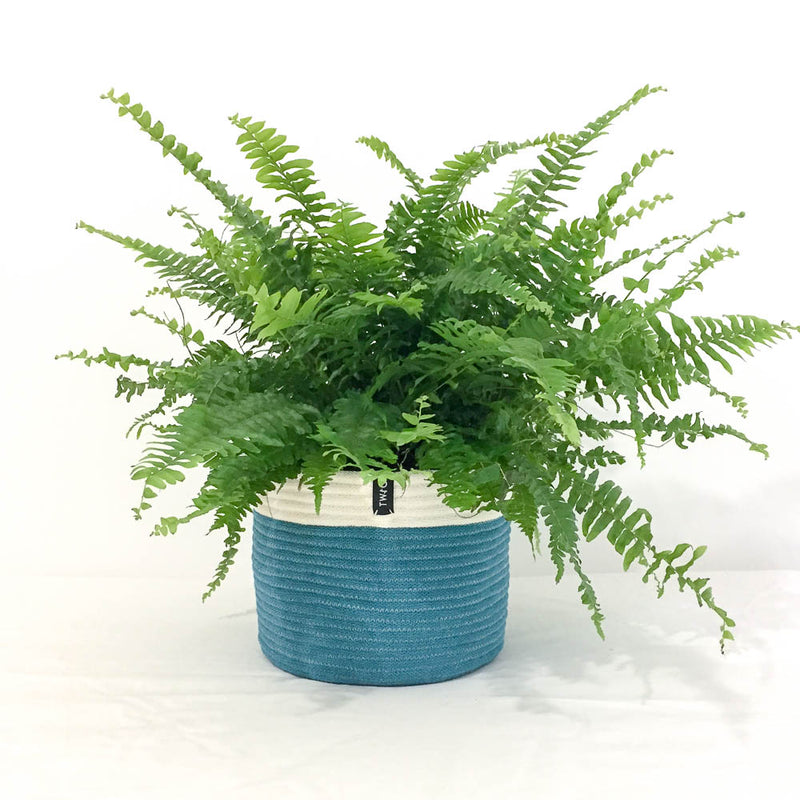 Twig Plants and Pots - Seagrass concrete indoor plant pot