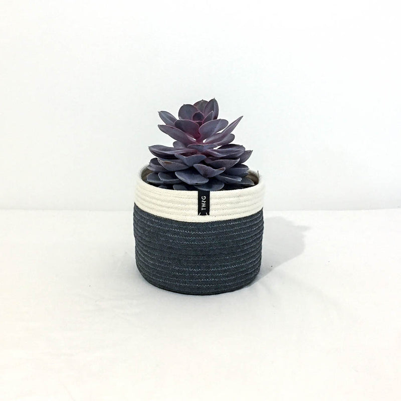 Twig Plants and Pots - Slate concrete indoor plant pot