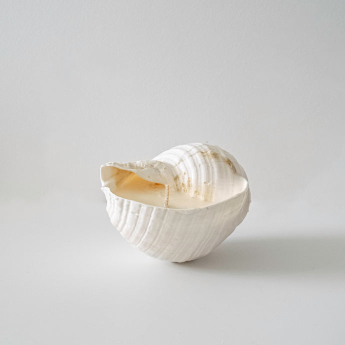 Small Tonna sea shell candle