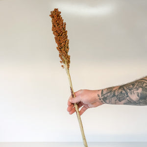 Dried Sorghum stem