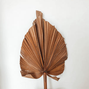 Dried X - Large cut Robusta palm leaves