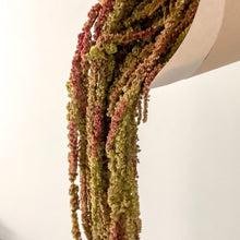 Load image into Gallery viewer, Natural green and burgundy amaranthus