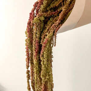 Natural green and burgundy amaranthus