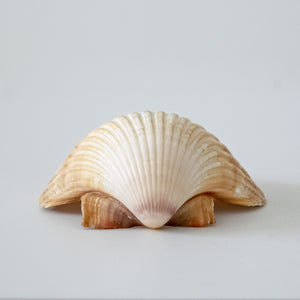 Small Scallop sea shell candle