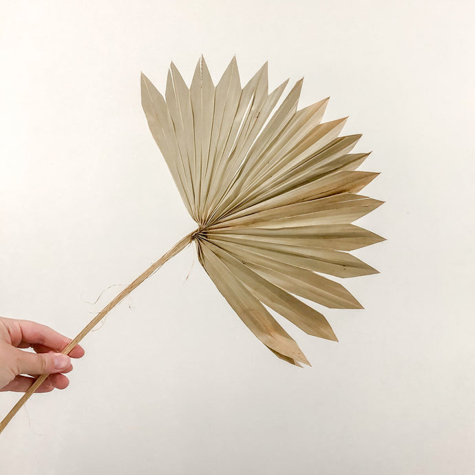 Natural Palm fan