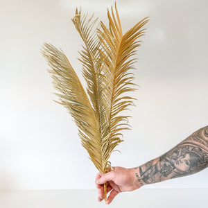 Dried Cycad palm leaves x 3