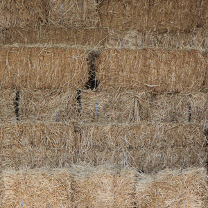 Grass Hay - Small Square