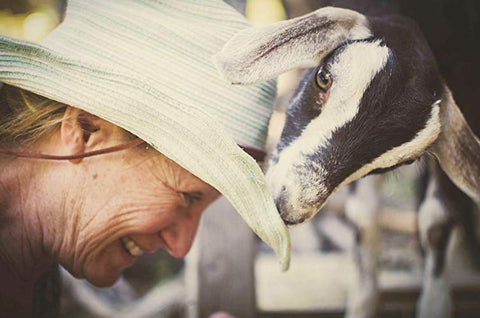 goat plays with owner's hat at fish princess farm