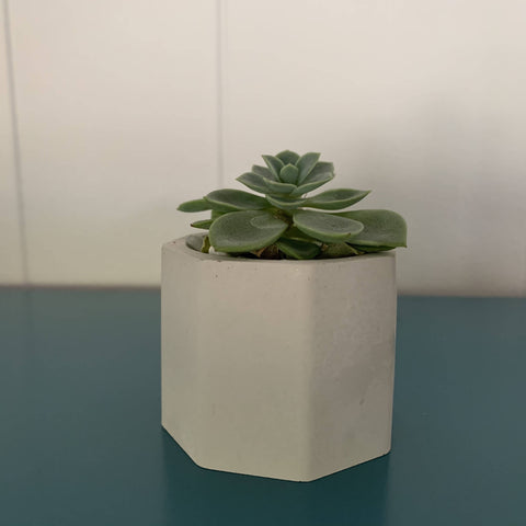 mini octagon concrete cactus pot with live succulent