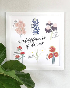 Wildflowers of Texas Hand Illustrated Wall Art Print