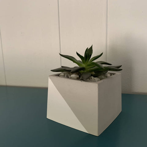 square concrete cactus pot with live succulent