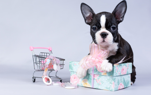 """Chew""sing The Right Toy for Your Dog-Bonne et Filou"
