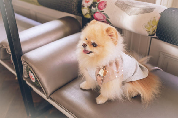 Pet Fashion Trends You Don't Want To Miss-Bonne et Filou