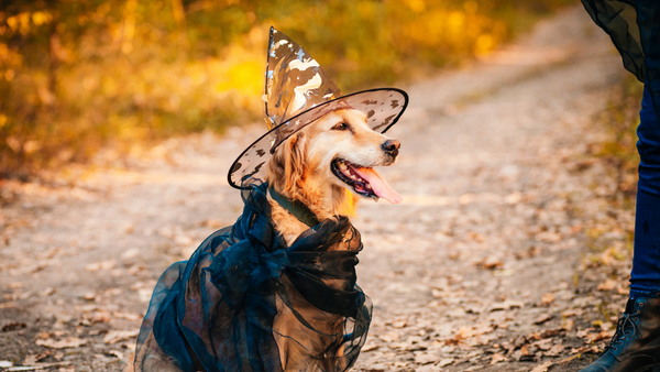 10 Unique Halloween Costume Ideas for Your Pup-Bonne et Filou
