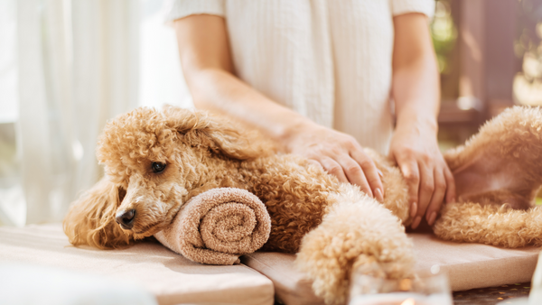 A Guide to Your Dog's At Home Spa Day-Bonne et Filou