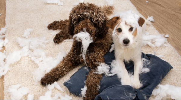 Tips For How to Stop Your Dog's Destructive Chewing