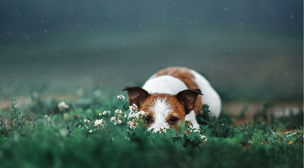 5 RAINY DAY WALKING ESSENTIALS FOR YOUR PET