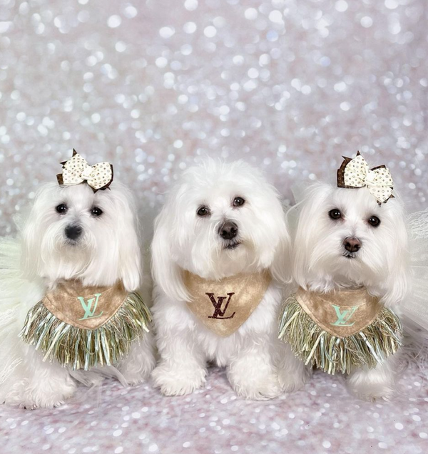 THE 5 BEST DRESSED PETS IN THE NEW YEAR-Bonne et Filou