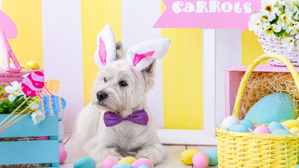 EASTER HAZARDS TO KEEP YOUR PET AWAY FROM