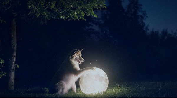 FIND OUT WHAT YOUR PETS ZODIAC MEANS