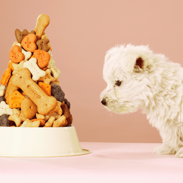 5 AMAZING DOG TREAT RECIPES YOUR PET WILL LOVE