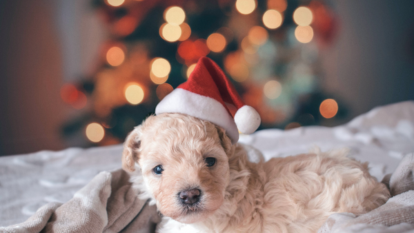 Our Top 11 Pet Gifts The 2020 Holiday Season-Bonne et Filou