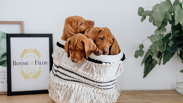 7 INSTA PET SIBLINGS YOU SHOULD FOLLOW