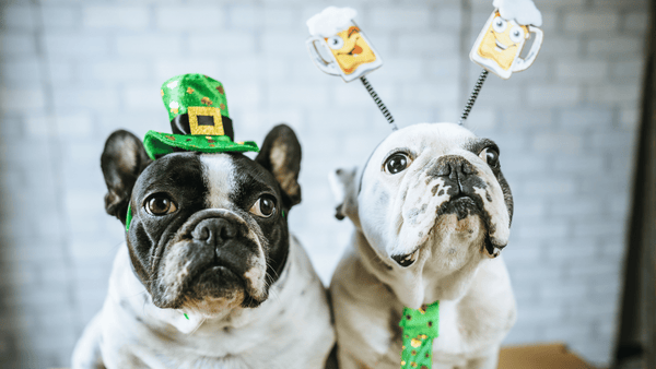 ST. PADDY'S DAY CELEBRATIONS FOR YOUR PUP!