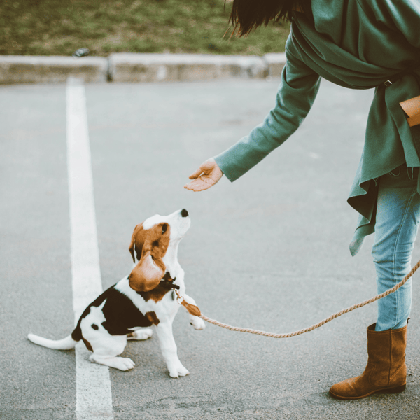 10 TRICKS FOR TRAINING YOUR NEW PUPPY-Bonne et Filou