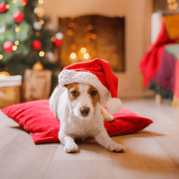 OUR 12 FAVORITE DOGS OF CHRISTMAS-Bonne et Filou