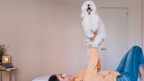 How to Introduce a New Pet Into Your Home-Bonne et Filou