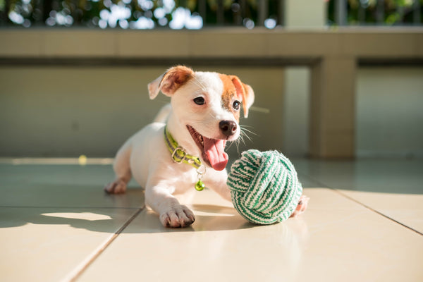 OUR 5 FAVORITE ECO_FRIENDLY DOG TOYS